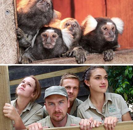 【趣闻】澳管理员模仿动物搞笑照片蹿红网络
